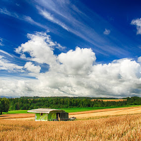 Wheat field by Kitty Bern - Landscapes Prairies, Meadows & Fields ( countryside, plant, straw, land, farmland, yellow, beauty, landscape, spring, sun, crop, farm, pasture, sky, nature, autumn, weather, light, wheat, grass, seed, green, beautiful, agriculture, cloudscape, horizon, forest, rural, cereal, farming, country, field, organic, environment, season, blue, sunset, grow, outdoor, background, ripe, meadow, scene, cloud, summer, day, harvest, natural )