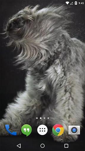 狗摇动动态壁纸