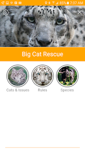 Big Cat Rescue- screenshot thumbnail