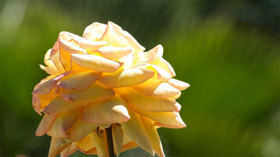 Sun Bloom.jpg