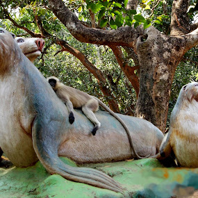 by Debashis Dey - Animals Other