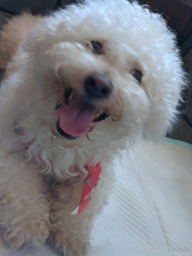 Do you know my owner?, FOUND Jun 15, 2019