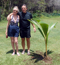 Photo: Mr. and Mrs. Wallace's 40th anniversary palm planting