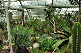 Photo: Woestijnplanten in Princess of Wales conservatory Kew