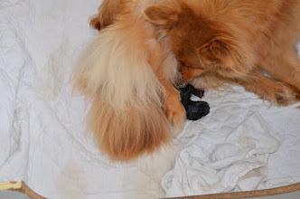 Photo: 1. juli kl. 17.06 kom første han 375 gram- har hvide forpoter og lidt hvidt på tværs af bryst kan vi se lige nu.