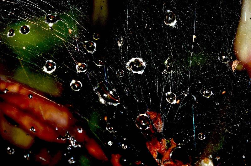 Gocce di pioggia su ragnatela di benny48