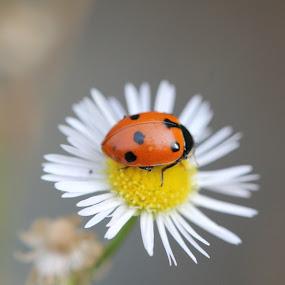 E poi ci sono i sogni e poi ci sono gli incubi... by Stefano De Maio Fotografia - Animals Insects & Spiders (  )