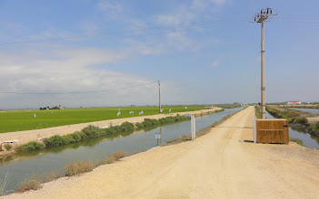 Photo: Rice field irrigation channels