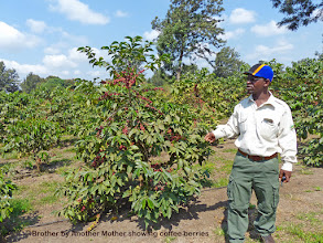 Photo: Emanuel, Brother by Another Mother, showing us around the adjoining coffee plantation.