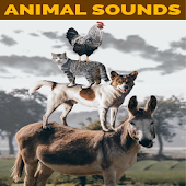 Animal Sounds & Facts