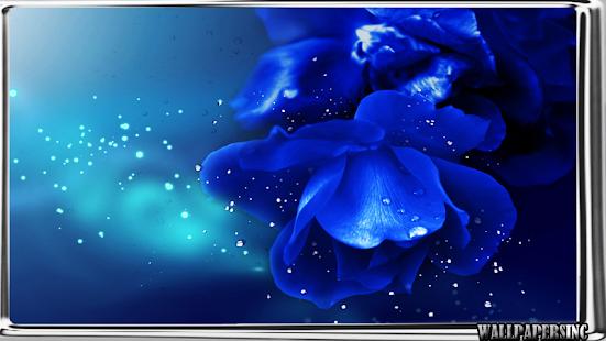 Blue Rose Wallpaper Screenshot Thumbnail