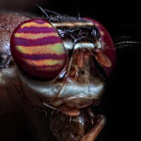 Close Up by Abdie Dedde Darrell - Animals Insects & Spiders