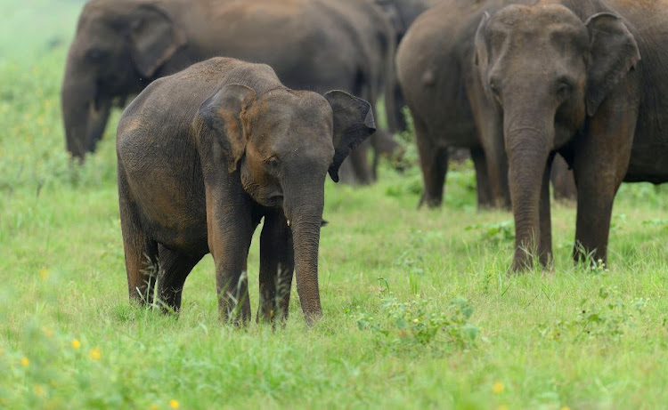 Game guide killed after being gouged by elephant in Kruger Park