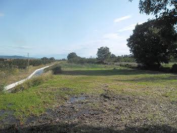 terrain à Ille-sur-Têt (66)