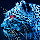 blue cheetah wallpaper