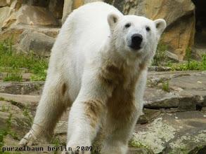 Photo: Knut schaut neugierig zu den Besuchern ;-)