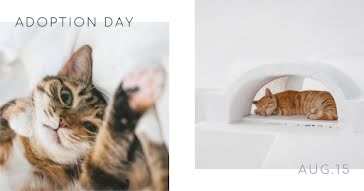 Cat Adoption Day - Facebook Event Cover Template