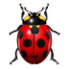 English Word (Insect) icon
