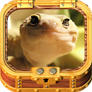 Book of Leopard Gecko Care v 1.0