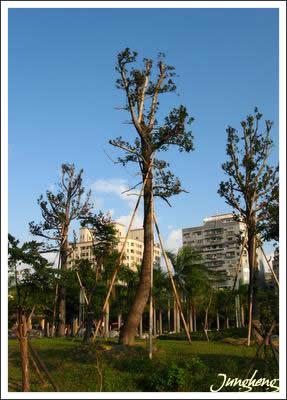 公園裡的樹