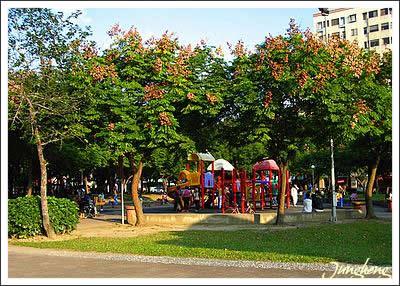 台灣欒樹包圍著小小遊樂園