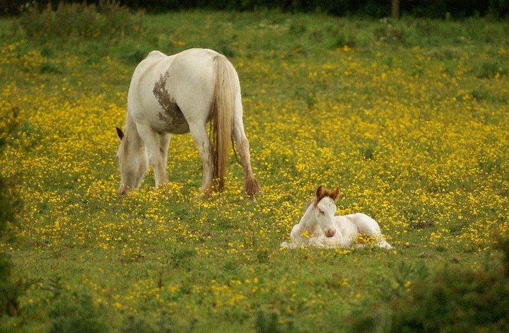 by Steve Adams - Animals Horses