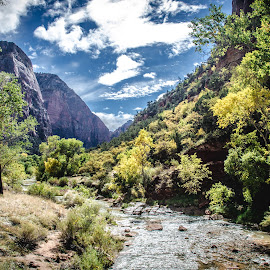 Zion by Amy Monteith - Novices Only Landscapes ( national park, zion, clouds, water, landscape )