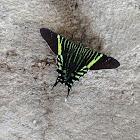Mariposa 🦋