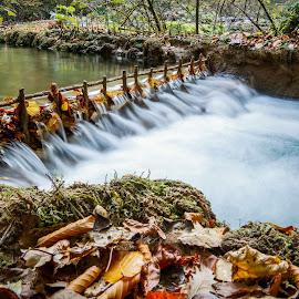 by Ovidiu Gruescu - Nature Up Close Water