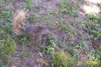 Photo: squirrel Fritzchen