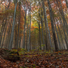 Autumn forest by Martin Namesny - Landscapes Forests ( autumn, mysterious, trees, forest, colored )