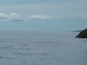 Photo: An Orca in the distance heading up Portland Inlet.