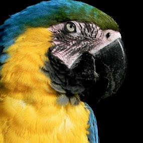 by Sarah Nelson - Animals Birds