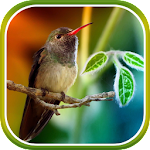 Hummingbirds Live Wallpaper Icon