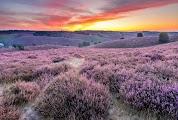 Пурпурный холм в Veluwezoom