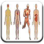 All Body Systems
