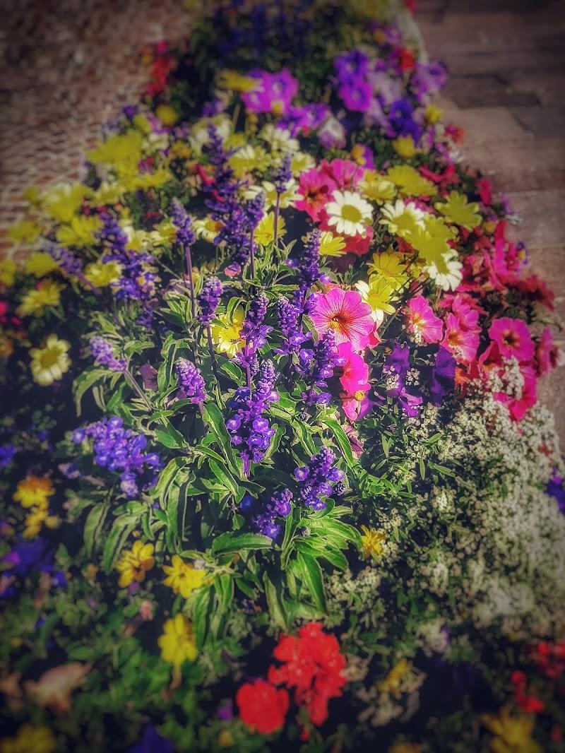 ogni fiore un colore.... di mauro_zoboli