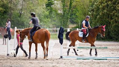 Photo: Cavalli e cavalieri nel campo