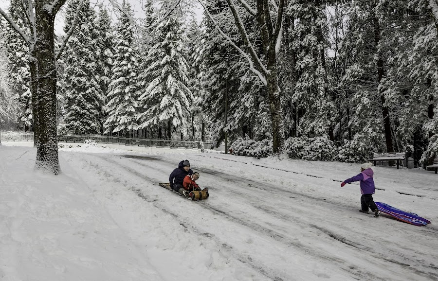 Sledding by Chris Bartell - People Family ( cold, snow, sled )