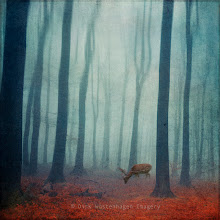 Photo: #mood   #forest   #abstraction  Space of Deer http://wuestenhagen-imagery.photoshelter.com/