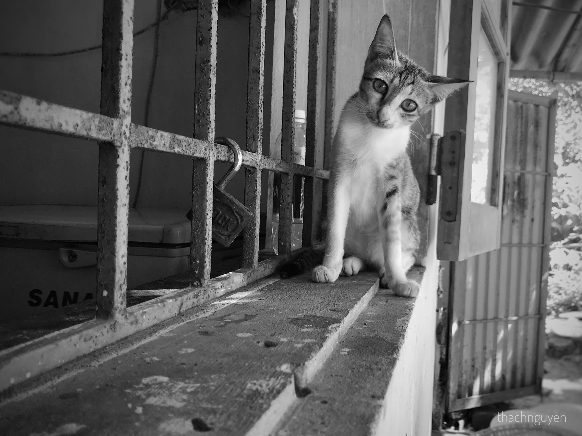 lop-1-cat