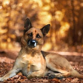 _dog no leash.jpg