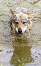 Photo: Trošku jsem plaval, ale radost mi to teda neudělalo...