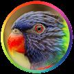 Best Bird Sounds And Ringtones APK