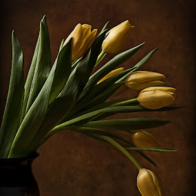 Tulips by Stacey Bates - Flowers Flower Arangements ( vase, blooms, yellow, tulips, flowers,  )