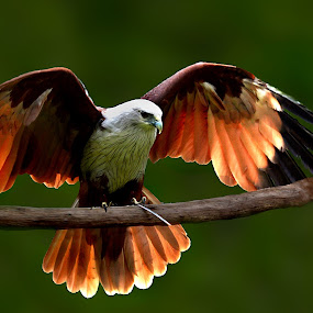 Stand by by Hendrik Cuaca - Animals Birds