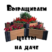 Выращиваем цветы на даче