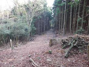 林道と合流すると京ヶ峯に