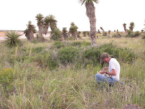 Photo: Collecting in Yucca Flats Laguna Atascosa NWR