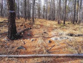 Табличка с надписью Шипы очень часто встречается на лесных дорогах, но мы слава богу на шипы не наткнулись
